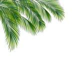 被隔绝的棕榈树叶子 免版税库存照片