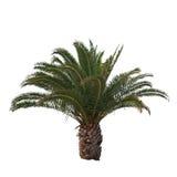被隔绝的棕榈树 免版税库存照片