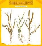 被隔绝的植物草 免版税图库摄影