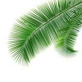 被隔绝的椰子叶子 库存例证