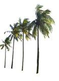 被隔绝的椰子树 免版税图库摄影