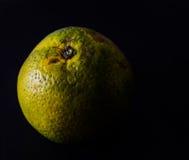 被隔绝的橙色果子在黑背景中 免版税库存照片