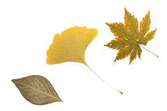 被隔绝的橙黄绿色叶子 库存照片