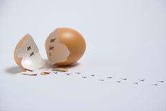 被隔绝的残破的蛋壳特写镜头 免版税库存照片
