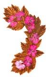 被隔绝的波浪线桃红色大竺葵,元素applica的汇集 免版税库存照片