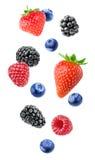 被隔绝的混杂的莓果 库存图片