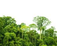 被隔绝的热带雨林风景 图库摄影