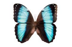 被隔绝的热带蝴蝶 免版税库存照片