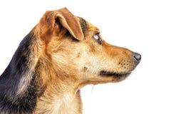 被隔绝的狗小小鹿画象外形面孔 免版税库存图片