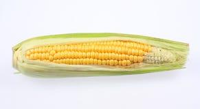 被隔绝的玉米穗 免版税库存图片