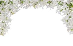被隔绝的白色淡紫色花半框架 免版税库存照片