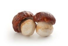 被隔绝的白色蘑菇 库存图片