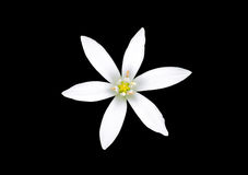 被隔绝的白花 库存图片