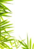 被隔绝的竹子叶子。 免版税库存图片
