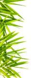 被隔绝的竹子叶子。 免版税库存照片