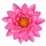 被隔绝的美丽的桃红色莲花或waterlily花。 免版税库存图片