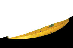 被隔绝的老黄色叶子 免版税库存照片