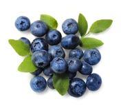 被隔绝的自然摘的蓝莓 免版税库存图片