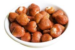 -被隔绝的草莓 免版税图库摄影