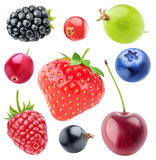 被隔绝的莓果收藏 免版税库存图片