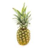 被隔绝的菠萝 免版税库存照片