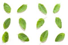 被隔绝的蓬蒿叶子纹理 免版税图库摄影