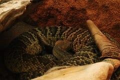 被隔绝的蛇最基本的顶头最基本的死亡蛇骨头头骨背景动物黑白色 免版税图库摄影