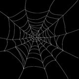 被隔绝的蜘蛛网 免版税库存图片