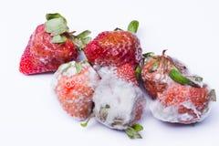 被隔绝的被损坏的草莓 库存图片