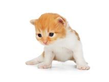 被隔绝的逗人喜爱的橙红小猫 免版税库存照片
