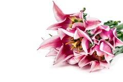 被隔绝的郁金香花 库存照片