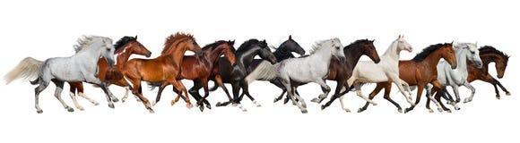 被隔绝的马牧群 免版税库存照片