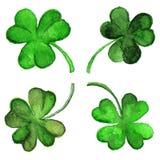 被隔绝的水彩爱尔兰绿色三叶草三叶草集合 免版税库存图片