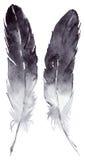 被隔绝的水彩黑白羽毛对集合 免版税图库摄影