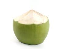 被隔绝的年轻椰子 免版税库存图片