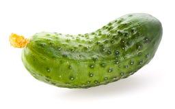 被隔绝的黄瓜 免版税库存图片