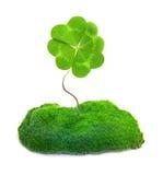 被隔绝的绿色三叶草叶子 免版税库存照片