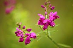 被隔绝的紫色灌木花 免版税库存照片
