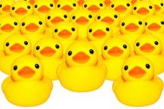 被隔绝的黄色鸭子 库存图片