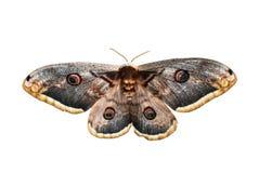 被隔绝的蝴蝶 库存图片