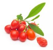 被隔绝的Goji莓果 免版税库存图片