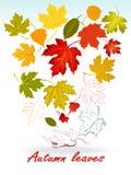 被隔绝的Setof五颜六色的秋叶。 库存图片