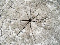 被集中的破裂的树干 图库摄影