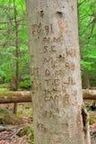 被雕刻的树干 库存照片