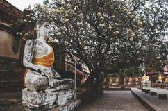 被雕刻的石菩萨雕象在阿尤特拉利夫雷斯围拢了与树 库存照片