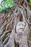 被雕刻的结构树雕塑 免版税图库摄影