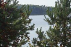 被雕刻的绿色和明亮的红色叶子在阳光下 库存照片