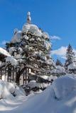 被雪包围住的杉木 免版税图库摄影