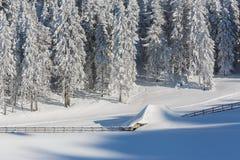 被雪包围住 库存图片