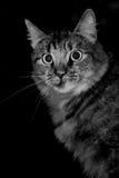 被震惊的猫 库存照片